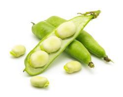 4月旬の青果物-そら豆
